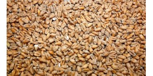 Weyermann Wheat Malt